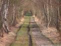 chemin de sologne