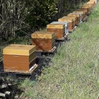vue ruches